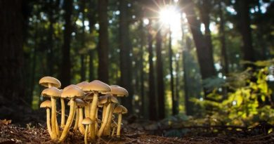 Let your immune system mushroom
